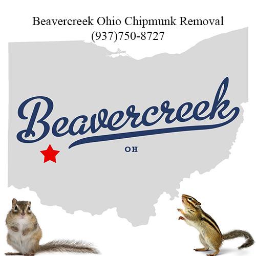 beavercreek chipmunk removal (937)750-8727