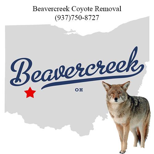 beavercreek coyote removal (937)750-8727