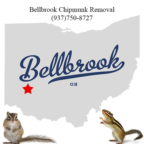 bellbrook chipmunk removal (937)750-8727