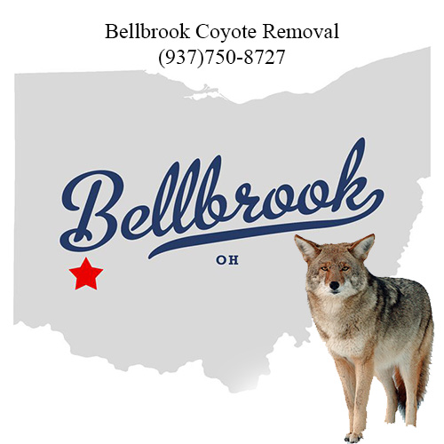 bellbrook coyote removal (937)750-8727