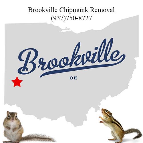 brookville chipmunk removal (937)750-8727