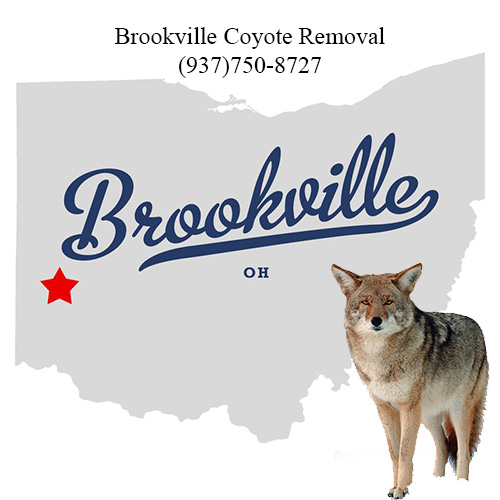 brookville coyote removal (937)750-8727