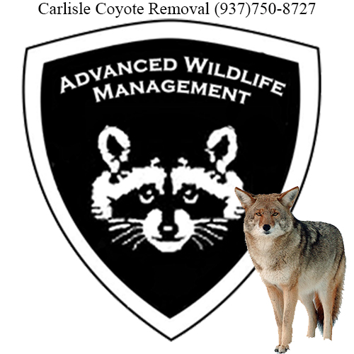 carlisle coyote removal (937)750-8727