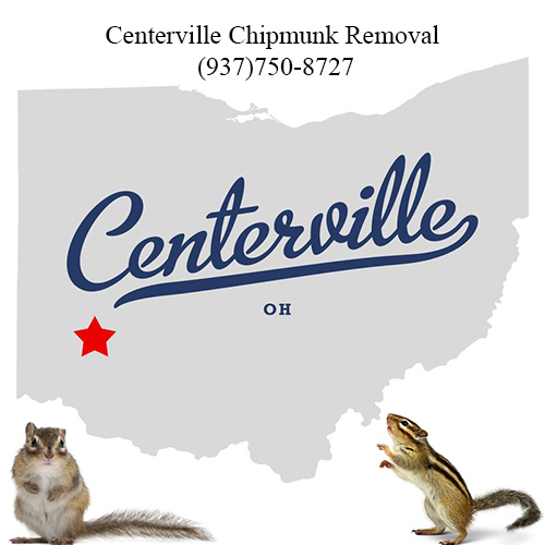centerville chipmunk removal (937)750-8727