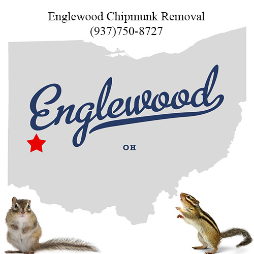 englewood chipmunk removal (937)750-8727
