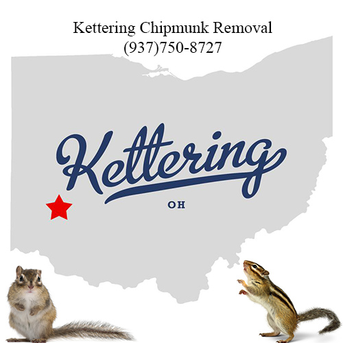 kettering chipmunk removal (937)750-8727