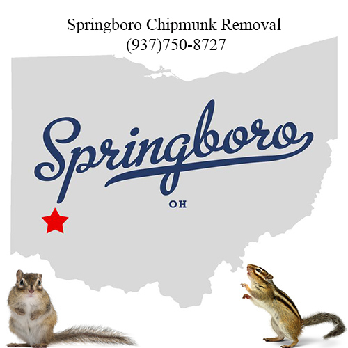 springboro chipmunk removal (937)750-8727