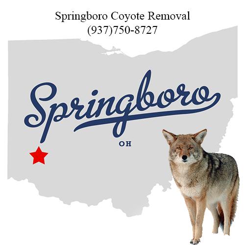 springboro coyote removal (937)750-8727