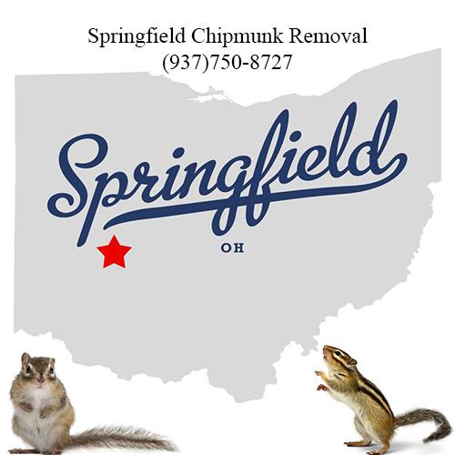 springfield chipmunk removal (937)750-8727