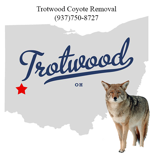 trotwood coyote removal (937)750-8727