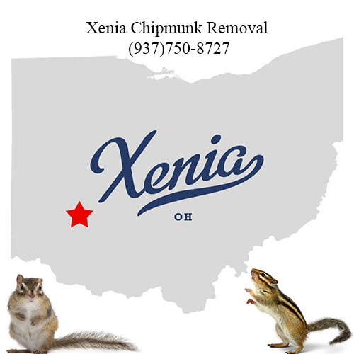 xenia chipmunk removal (937)750-8727