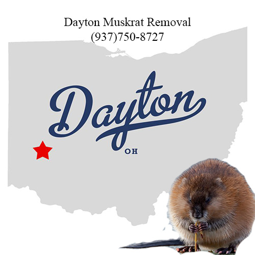 dayton muskrat removal (937)750-8727