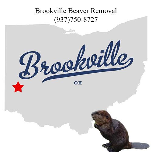 brookville beaver removal (937)750-8727