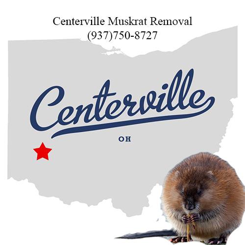 centerville muskrat removal (937)750-8727