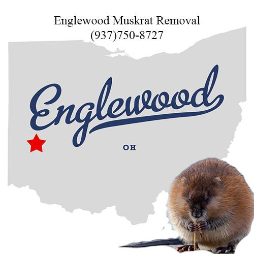 englewood muskrat removal (937)750-8727