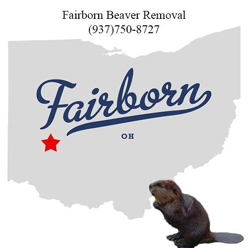 fairborn beaver removal (937)750-8727