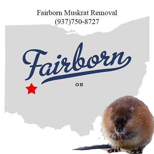 fairborn muskrat removal ohio (937)750-8727