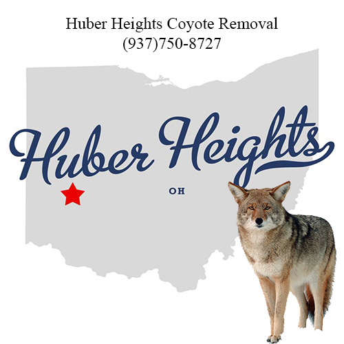 huber heights coyote removal