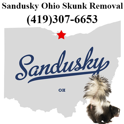 Sandusky Skunk Removal Ohio
